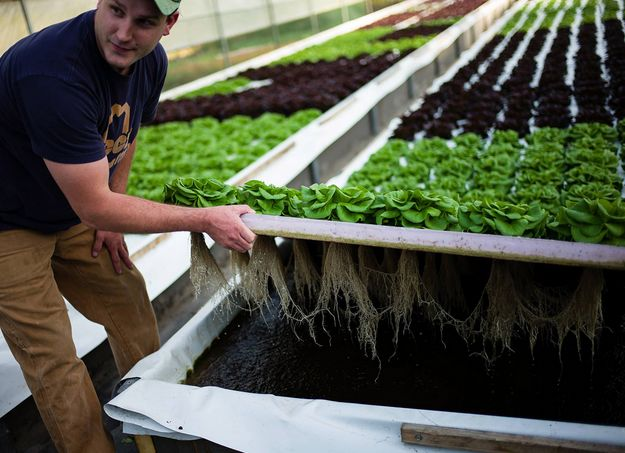 Check out Hydroponic Systems Round Up | 33 Best Hydroponic Ideas For your Homestead at http://pioneersettler.com/hydroponic-systems-round-up-33-best-hydroponic-ideas-for-your-garden/