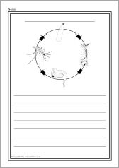 Mosquito life cycle colour and write worksheets (SB11023) - SparkleBox