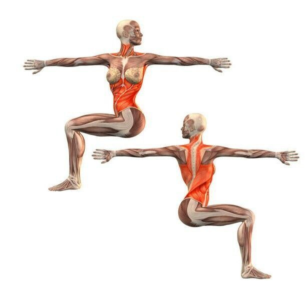 Pin by Pamela Bell English on Yoga: Muscles used   Yoga ...