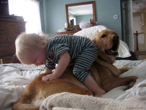 http://ehealthyrecipes.com/ .  cute  dog