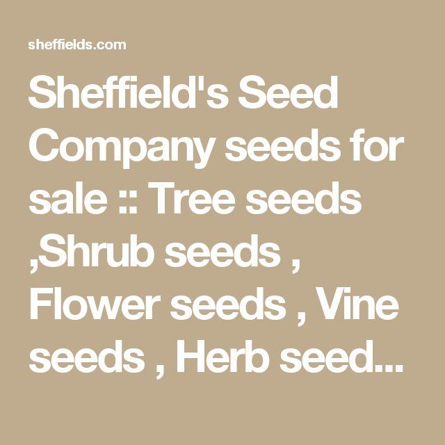 Sheffield's Seed Company seeds for sale :: Tree seeds ,Shrub seeds , Flower seeds , Vine seeds , Herb seeds ,Grass seeds , Vegetable seeds :: Seeds for Sale, Tree seeds, Shrub seeds, Flower seeds, Vine seeds, Herb seeds,Grass seeds, Vegetable seeds