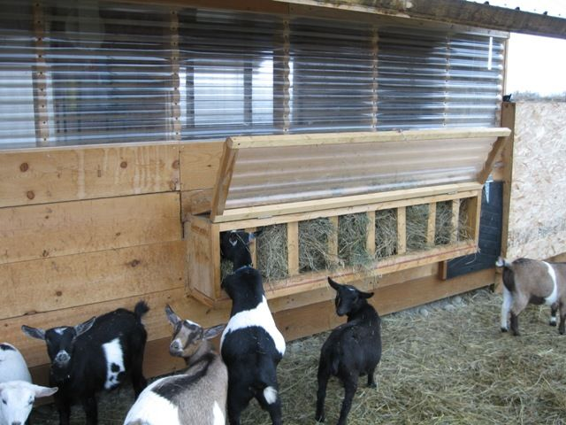 Fair Skies Nigerian Dwarf dairy goats, Wasilla, Alaska They have so many great ideas for a goat barn!  A LOT of thought went into this.