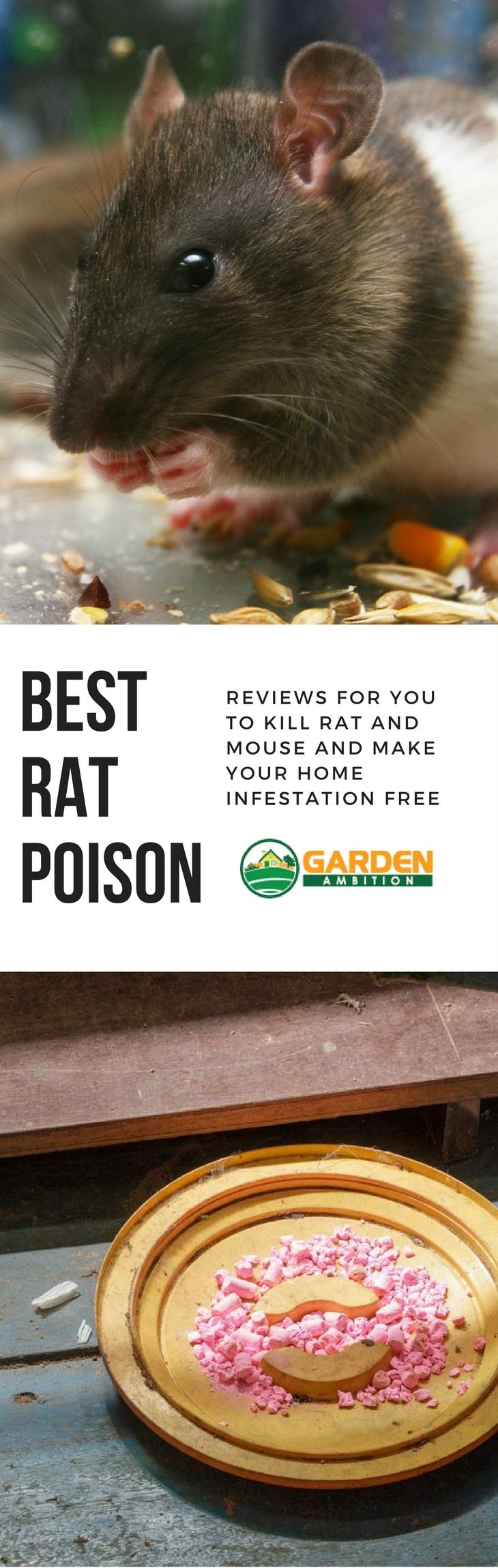 Best Rat Poison Reviews for You to Kill Rat & Mouse and Make Your Home Infestation Free