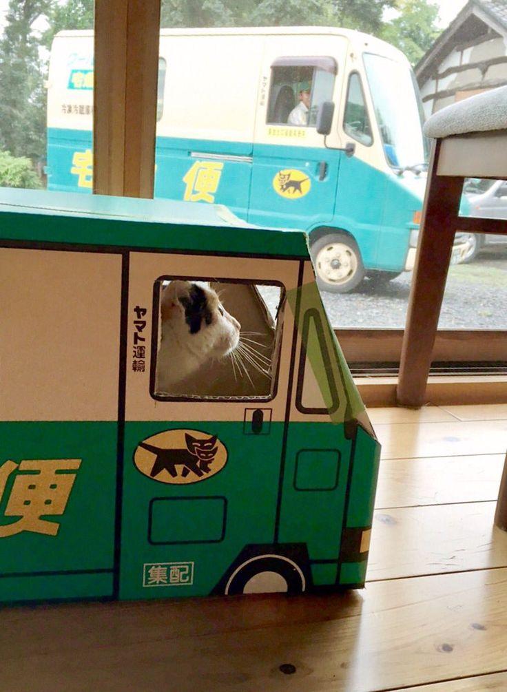 本物のお兄さんに笑われました。猫営業所は今日もお仕事。 pic.twitter.com/AxRksjeFCx