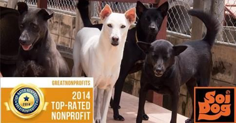 Did you know that Soi Dog Foundation is listed on the Great Non-Profits website, which hosts independent reviews of charitable organizations?  Great Non-Profits is an excellent way to find, review and share information on your favorite charity.  Soi Dog Foundation has once more been ranked as a Top-Rated Non-Profit in 2014 - click below to read more!  http://greatnonprofits.org/org/soi-dog-foundation-usa