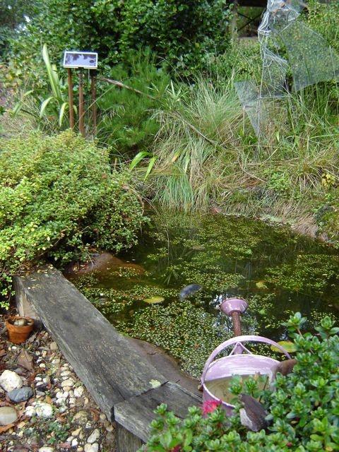 28 best frog habitat images on pinterest frog habitat for Small frog pond ideas