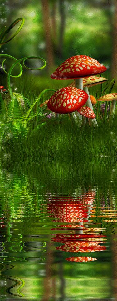 beautiful forest reflection