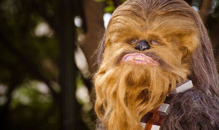 Are you a year round wookiee? Or just one during the winter months?