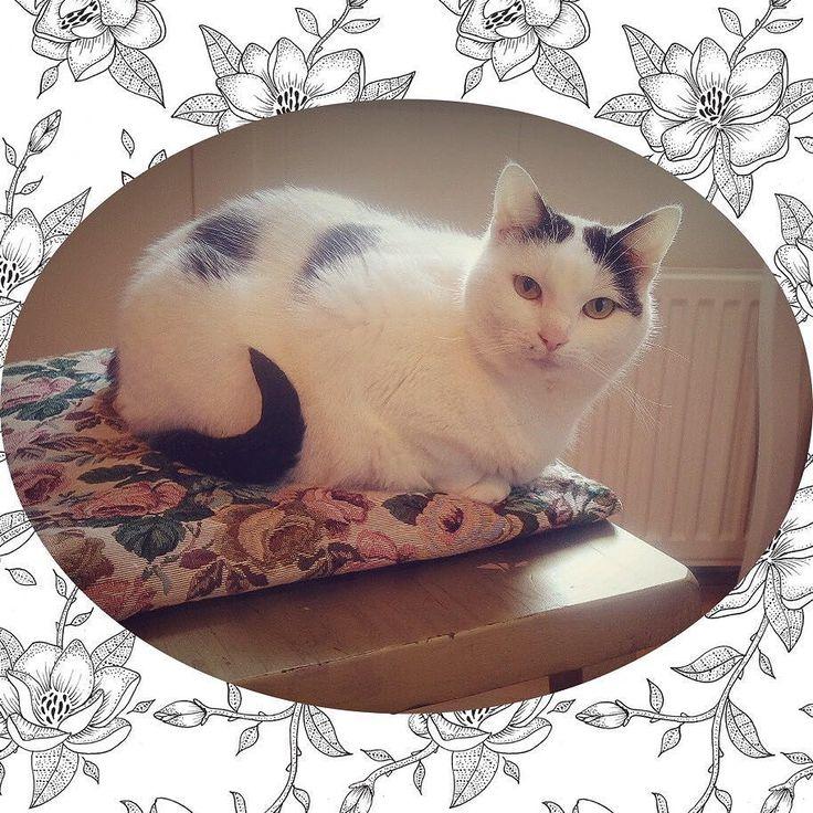 Hello gorgeous!  #cat #cats #cute #dutch #sweet #style #cutecat