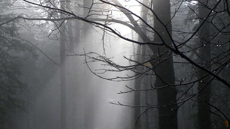 Šumavská mlha