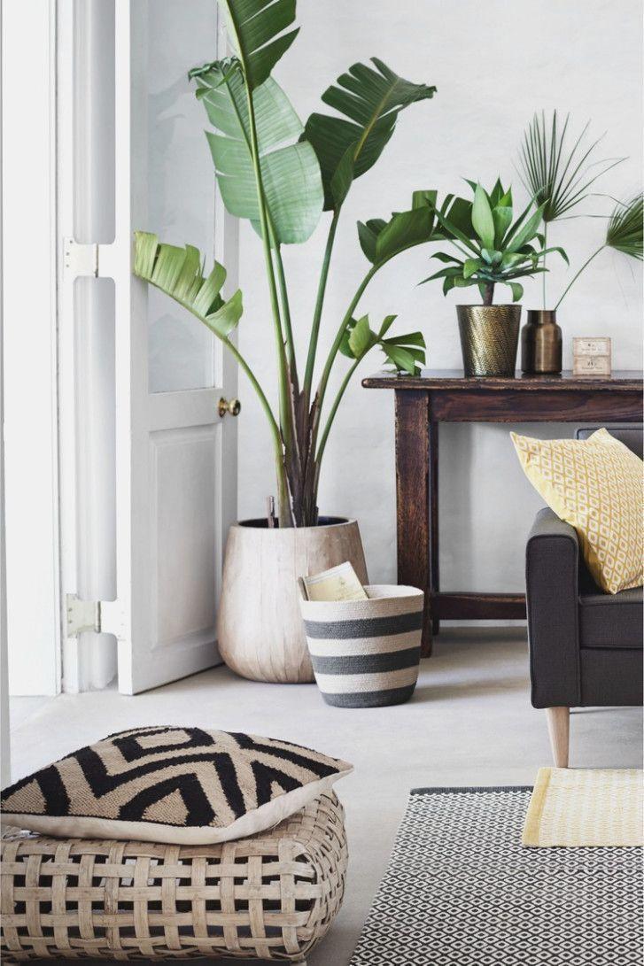 Wohnzimmer Dekoration Pflanzen Wohnzimmer Ideen - # - Pflanzen