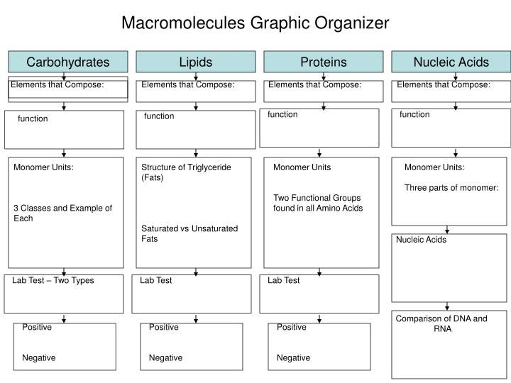 24 best images about macromolecules b 9a on pinterest polymers graphic organizers and protein. Black Bedroom Furniture Sets. Home Design Ideas