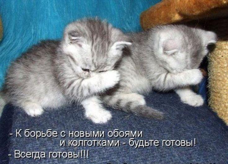 Картинки про котов котят и кошек с надписями, надписями