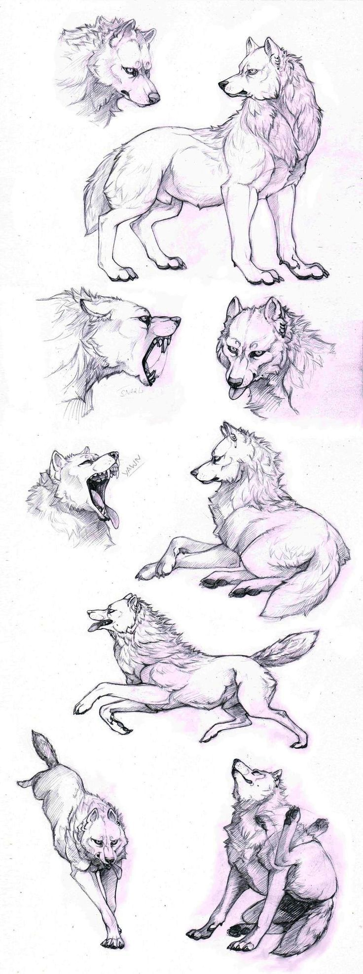 How to draw a wolf - different poses: howling, lying, standing - Animal drawing reference