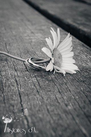 alliances et marguerite mariage champêtre