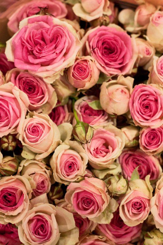 Roses Mimi Eden #fleurs #mariage