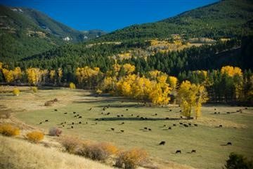 One of the few remaining Montana ranches in the Gallatin Mountain foothills near Bozeman, Montana.