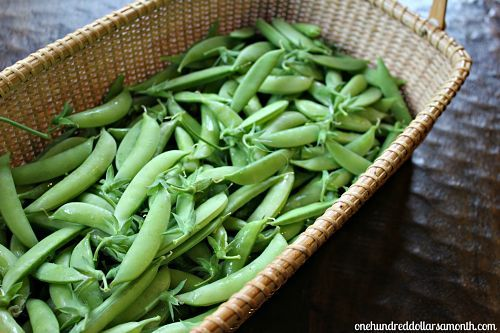 How to grow sugar snap peas, lots of info! When to pick & recipes!!!'