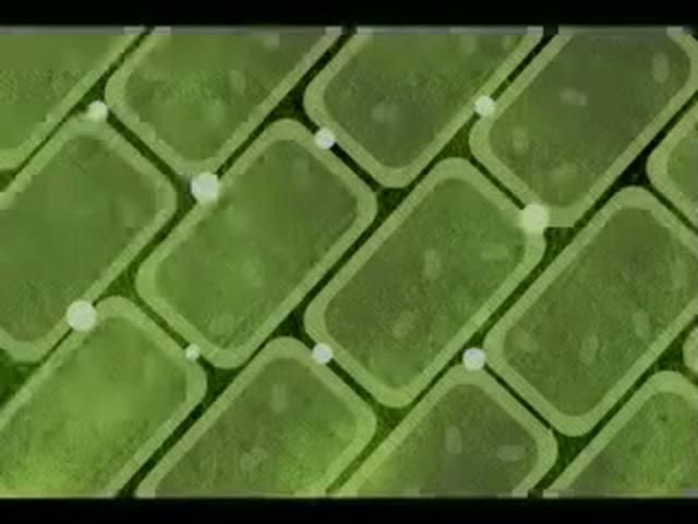 Photosynthesis video showing how plants use sunlight to create energy.  Great video that starts at the macro level and zooms in to show the breaking and forming of bonds at the molecular level.