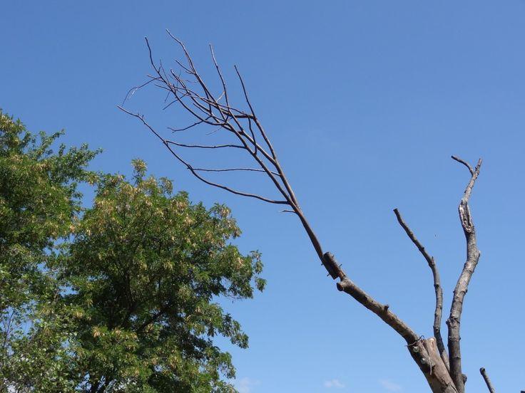 Gabriela Albergaria - 'Two Trees in Balance'