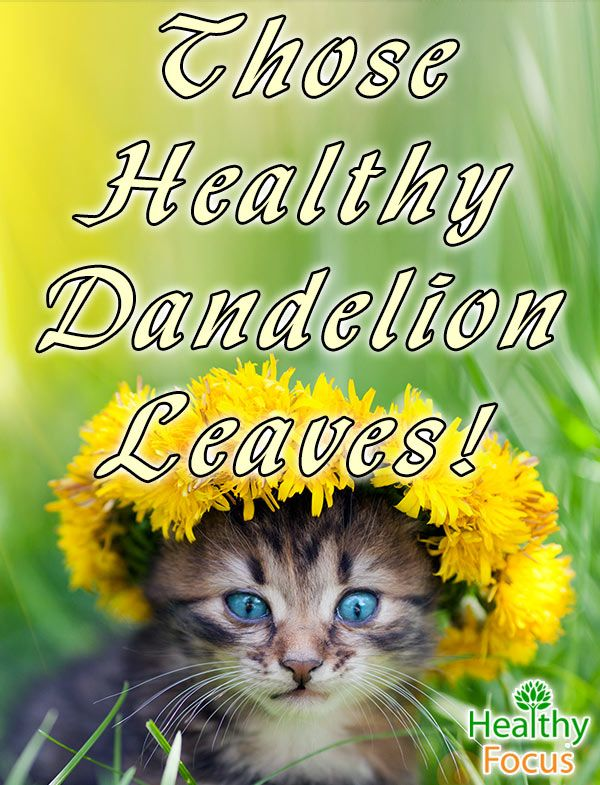 6 Health Benefits of Dandelion Leaves. More than a weed, Dandelion Leaves have many health benefits. Find out the 6 best uses that are backed by science