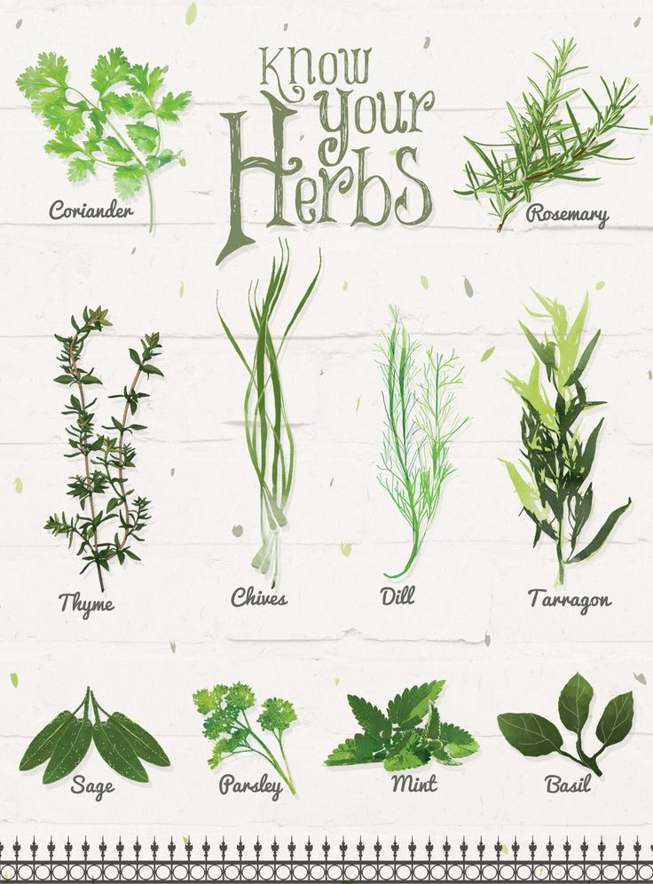Know your herbs! - Illustration by Svabhu Kohli - BBC Good Food India