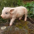 Sucht ein neues Zuhause  Süße Dekofigur Kleines Schwein Ferkel Glücksschwein wie echt bestehend aus Kunstharz, Kunststein. wetterfest,frostfest. handbemalt.  Höhe: ca. 25 cm Länge: ca. 32...
