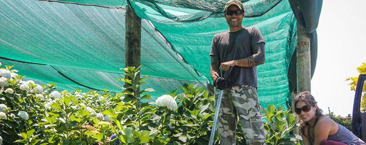 """Existem muitas oportunidades de curto prazo e de trabalho sazonal na Nova Zelândia. E depois de algum tempo viajando, você acaba pegando a manha de onde procurar. Na indústria de frutas o trabalho é durante todo o ano, embora a maior parte dos empregos estejam disponíveis entre dezembro e maio. A plantação de kiwi, por...<br /><a class=""""more-link"""" href=""""https://viagem.catracalivre.com.br/brasil/mundo-viagem/indicacao/quer-viajar-e-trabalhar-na-nova-zelandia/"""">Continue lendo »</a>"""