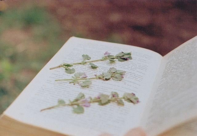 , | Flickr - Photo Sharing!