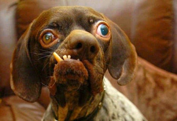 5 of the strangest looking dogs you have ever seen