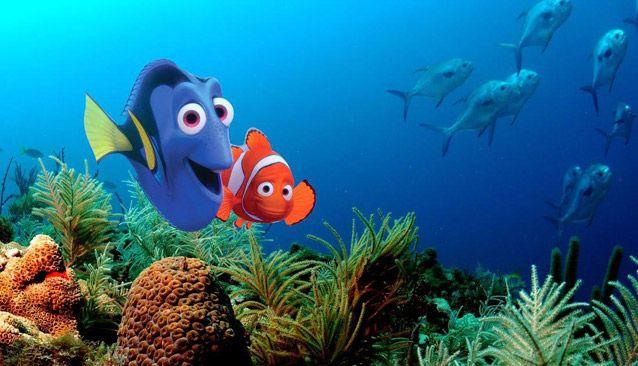 Finding Nemo Disney Walt Disney Movies Fish Animation: 19 Best Cinema, Caligula Images On Pinterest
