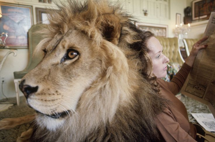 And Hedren, who was famed for such Hitchcock movies as The Birds, using him as a cushion as she reads a newspaper. | These Photos Of A Teenage Melanie Griffith And Her Pet Lion In The 1970s Are Quite Something