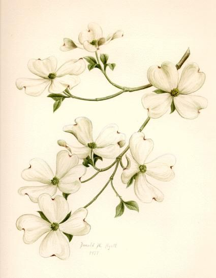 Tattoo ideas: Dogwoods always remind me of my mother, since they're her favorite.