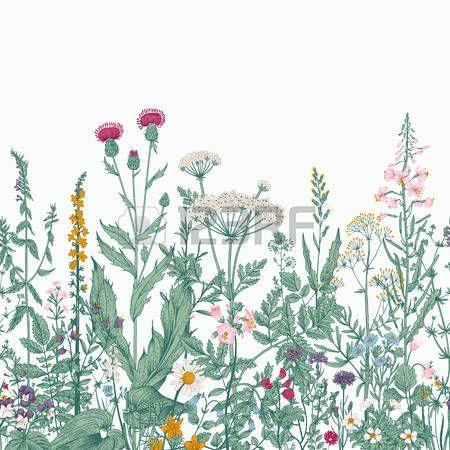 Вектор бесшовные цветочные границу. Травы и дикие цветы. Ботанический…