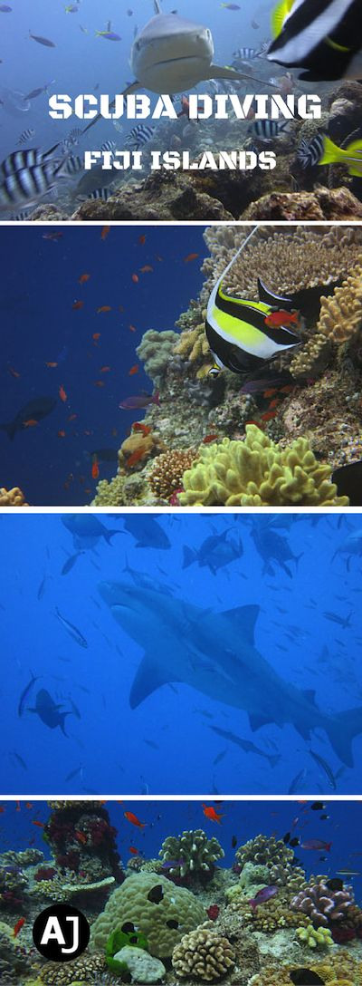 Scuba Diving in the Soft Coral Capital of the World, together with plenty of sharks.