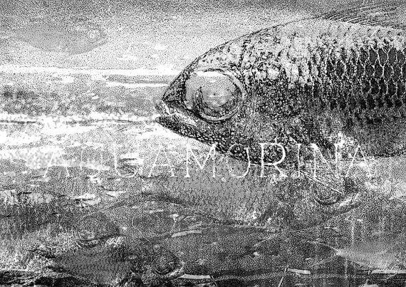shoal 3 art printmodern black and white graphic wall by aquamorina