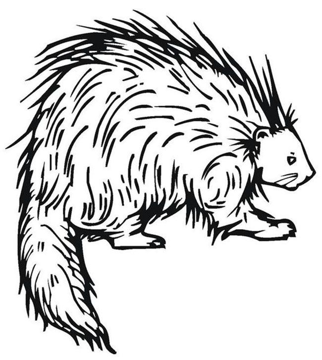 64 best Animal Coloring Pages images on Pinterest Colouring