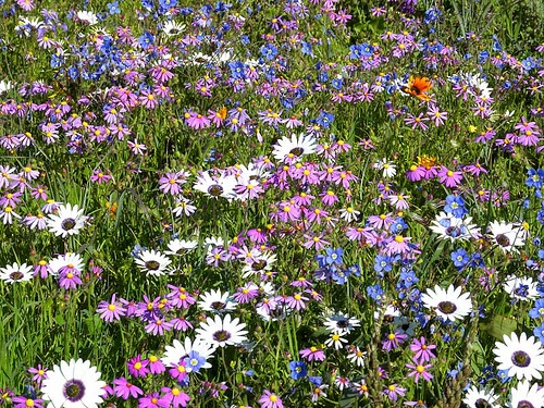 A drive along the West Coast and into the Swartland to see the flowers