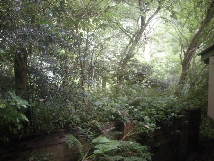 The Dandenong Ranges, VIC