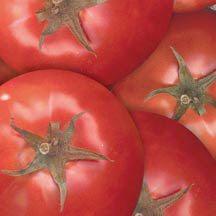 Bella Rosa Hybrid Tomato | Spotted Wilt Virus Resistant Tomato Seeds | Tomato Seeds | Totally Tomatoes