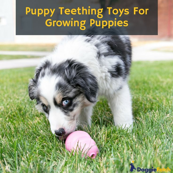 how to train a puppy not to chew