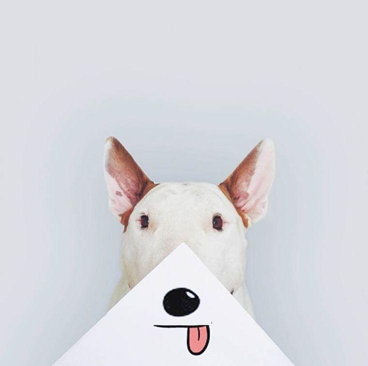 Bull Terrier – Quand un photographe s'amuse avec son chien sur Instagram