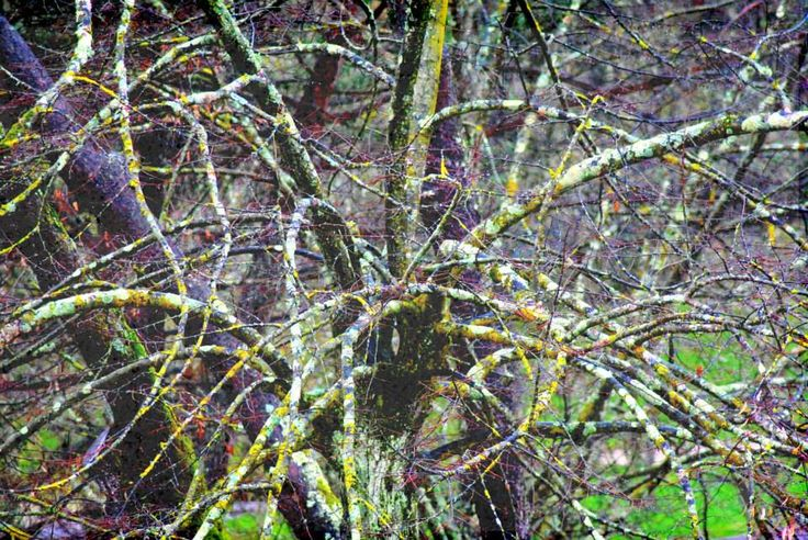 live tree dry