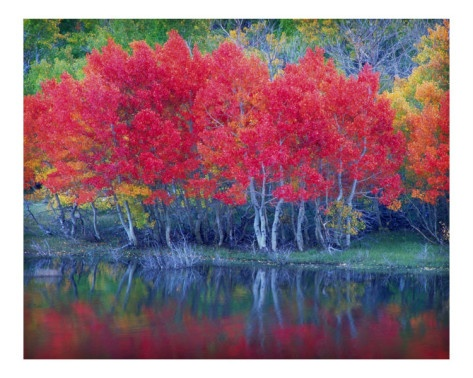 Fall Leaves, Fall Colors, Fall Time, Fall Foliage, Early September Wedding Colors, Lakes Aspen, Fall Autumn, Fall Trees, Autumn Trees