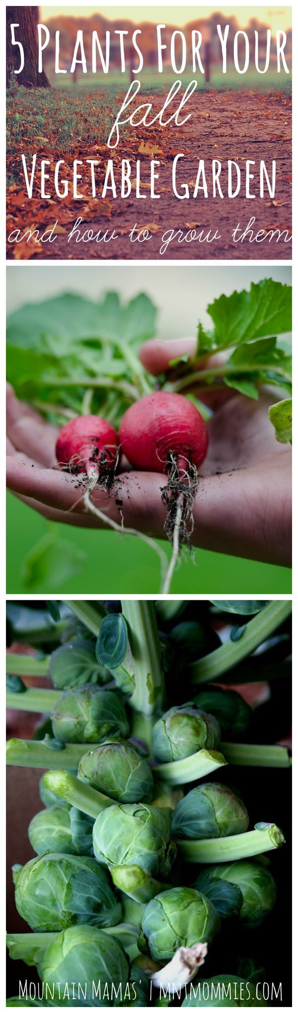 best 25 fall vegetable gardening ideas on pinterest fall