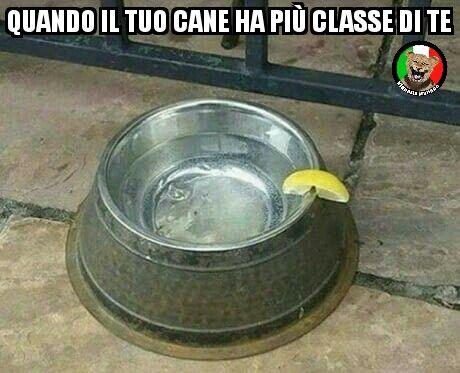 #vignetteitaliane.it #vignette #divertenti #italiane #funny #lol #immagini #pics #sport #umorismo #risate #ridere #cani