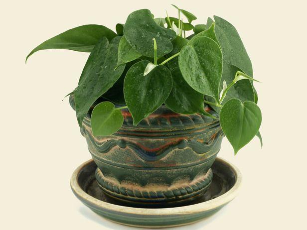 ab95d60728fbae8ac1885bee8d844508--indoor-plants-garden-plants