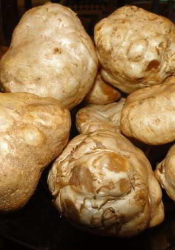 Taste the white Truffle in Piedmont itravelitaly