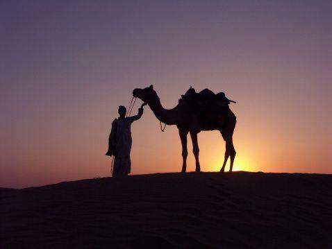 ラクダ 駱駝 Camel     Sunset at Sam Dunes, Jaisalmer, Rajasthan,India