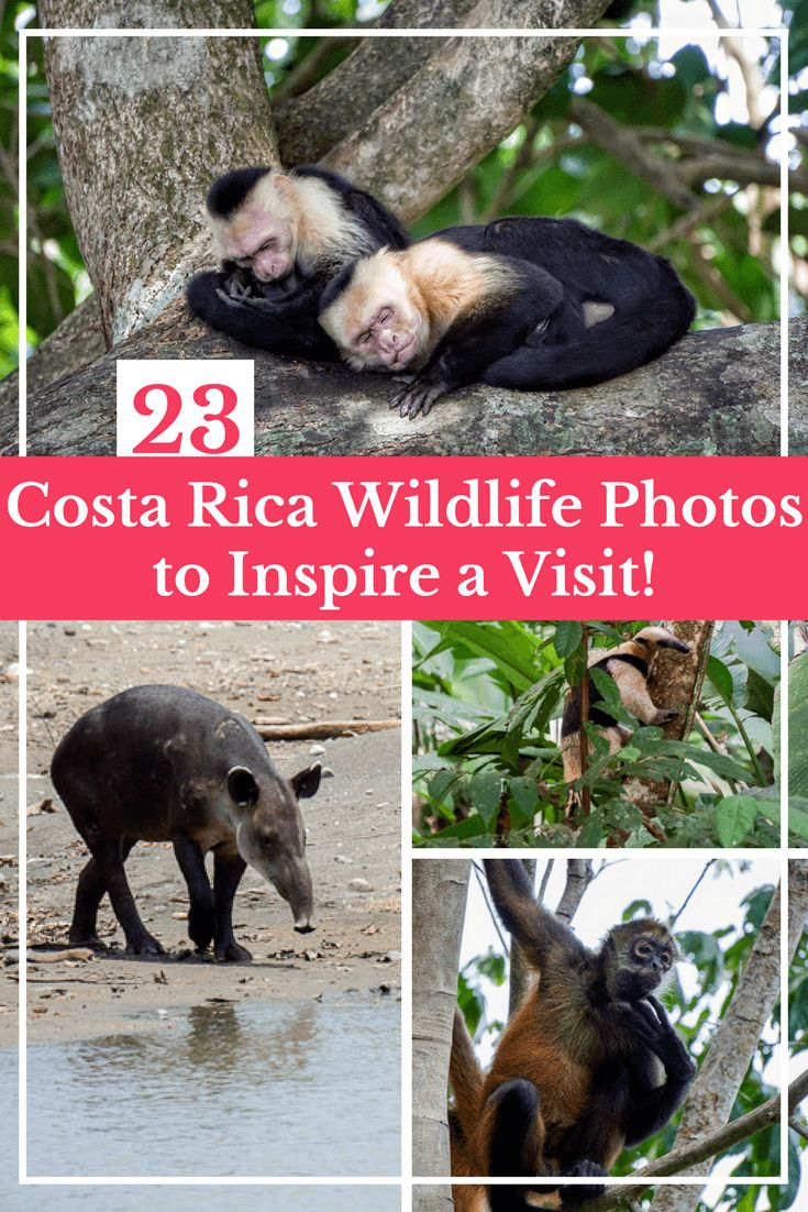 23 Costa Rica Wildlife Photos to Make You Want to Visit Right Now | Travel Costa Rica | Wildlife Photography